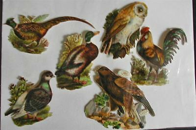 Victorian Die Cut Scraps Birds Eagle Owl Duck Great Color and Detail 6