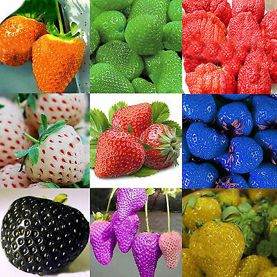Noble 10 Colors Strawberry Seeds Red Black Blue Everbearing Fruit Plants Garden