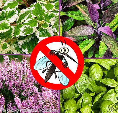ANTI MOSQUITO MIX - 50 species of seeds - 1 gram flowers  - herbs -  plant seeds
