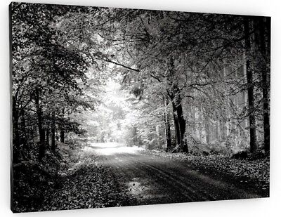 Stunning Forest Black And White Trees Canvas Picture Large 693