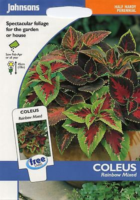 Johnsons Seeds - Pictorial Pack - Flower - Coleus Rainbow Mixed - 100 Seeds