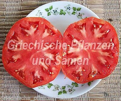 German Giant Riesen-Tomate all types of tomatoes 10 Seeds
