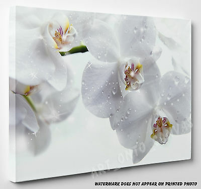 X Large Stunning White Orchid Flowers Canvas Picture Print Wall Art A1 A2