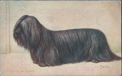 Skye Terrier Vintage Spratts Dog Postcard Advertising F.T. Daws