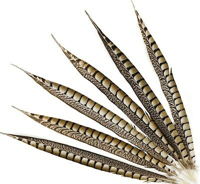 """25 Pcs LADY AMHERST PHEASANT Feathers 16-20"""" Top Quality!! Craft/Hats/Costume"""