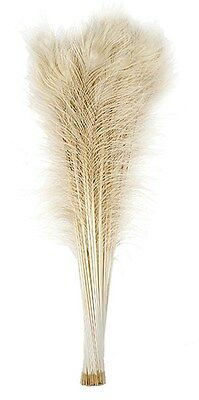 """100 Pcs BLEACHED PEACOCK TAILS Feathers 30-35"""" (Crafts/Halloween/Bridal/Costume)"""
