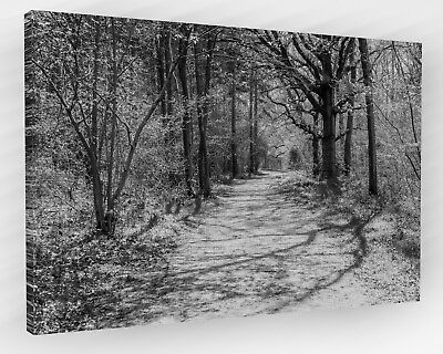 Woods/woodland Forest Path Canvas Picture Large Black&white 889