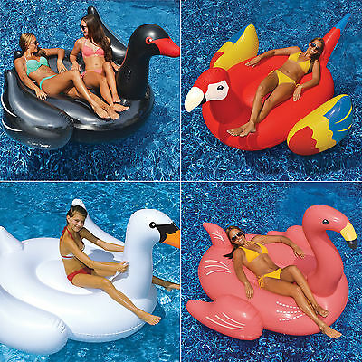 Giant Pool Inflatable Black White Swan Flamingo Parrot Water Lounge 4 Value Pack