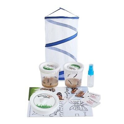 LIVE Butterfly Kit:Large Pop up Cage, FREE Certificate for 10 Caterpillars &More