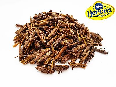 HERONS Natural Dried Grasshoppers BEARDED DRAGON, GECKO, TURTLE, REPTILE FOOD