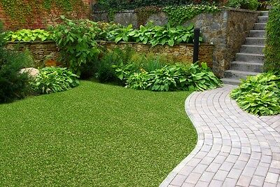 NEW Synthetic Artificial Grass Turf 10 sqm Roll - 20 mm - LOWEST PRICE ON EBAY
