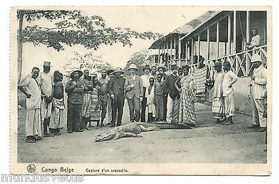 CONGO . Capture d'un crocodile . Capturing a crocodile