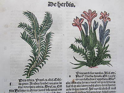 Incunable Leaf Hortus Sanitatis Spinach Nardostachys Colored Woodcut Venice 1500
