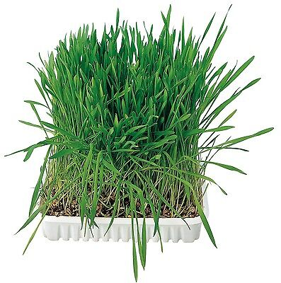 Trixie Cat Soft Grass With Tray 100g