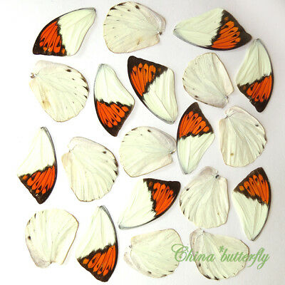 20 pcs REAL BUTTERFLY wing material photography / DIY artwork / jewelry #33