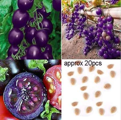 20 Seeds Plant Heirloom Purple Cherry Organic Fruit Vegetable Tomato Garden New