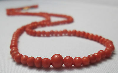 Antique Edwardian 100% Real Undyed Red Salmon Coral Necklace