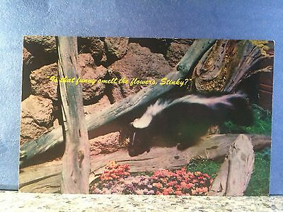 Postcard What Is That Funny Smell Asks The Skunk