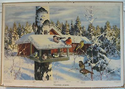 1930s Swedish cardboard SCHOOL POSTER or CHART with winter BIRDS at the farm