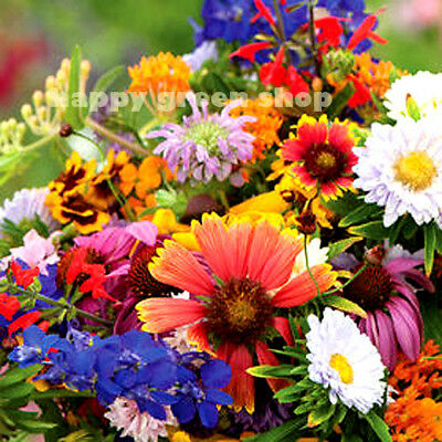 SCENTED FLOWERS MIXTURE - 1g seeds for 2m² - Attractive to bee and butterfly