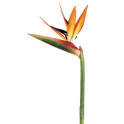 "31"" Handwrapped Silk Large Bird Of Paradise Flower Spray -Natural (pack of 6)"