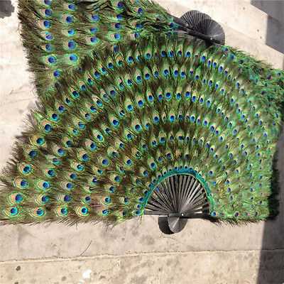 "Peacock Eyes Double sizes Feathers Fans 24"" x 43"" Decorative and perform"