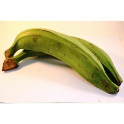 Fresh Green Plantain (Pack of 10)