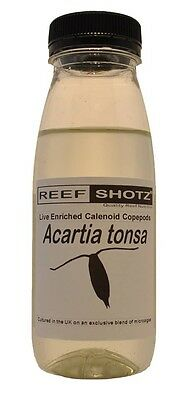 Acartia Tonsa. UK Cultured Live Enriched Calenoid Copepods, Zoo Plankton, Feed