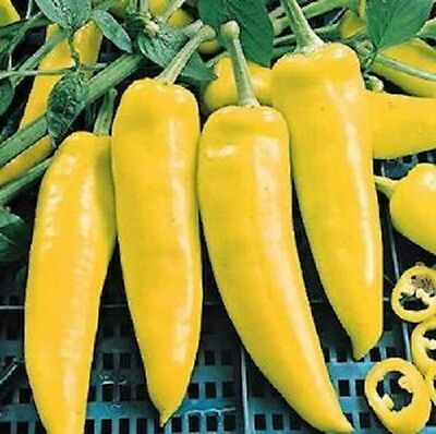 Pepper Hungarian Yellow Wax Sweet Productive Does Well In Containers 30 Seeds