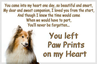 Rough Collie Pet loss Bereavement Gift Paw Prints on heart fridge magnet