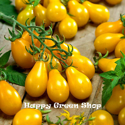 Vegetable - 420 Seeds - Tomato Yellow Pear - Cherry Bell