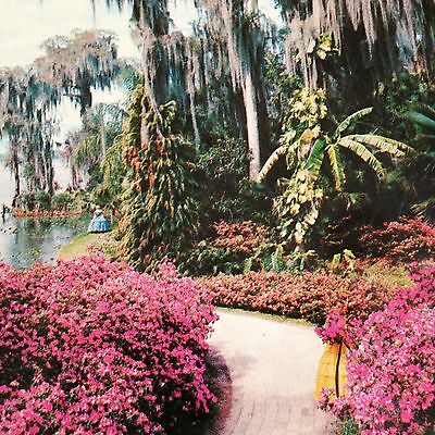 Cypress Gardens Southern Belles & Azalea Path Postcard Vintage Unused Florida