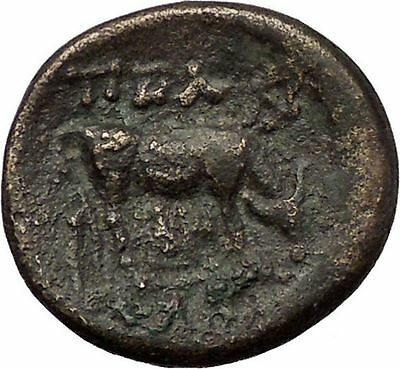 PELLA in MACEDONIA 158BC Athena Bull Genuine Authentic Ancient Greek Coin i57666