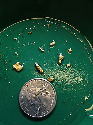 Gold Paydirt Unsearched & Guaranteed Added GOLD! Panning Nugget