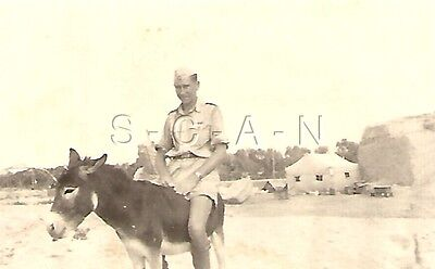 WWII German Luftwaffe RP- Afrika Korps- DAK Light AA Unit- Rides Donkey- Comic