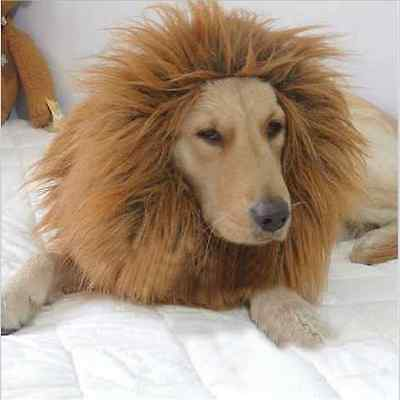 1 Pet Costume Lion Mane Wig For Dog Dogs Hair Halloween Fancy Dress Up Party WT