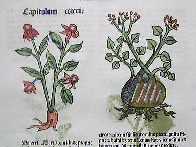 Incunable Leaf Hortus Sanitatis Pennywort Stinging Needle Woodcut Venice - 1500