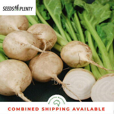 BEETROOT - White (200 Seeds)