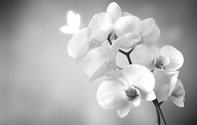 "GRAY WHITE ORCHID FLOWERS CANVAS PICTURE WALL ART LARGE 20x30"" #1160"