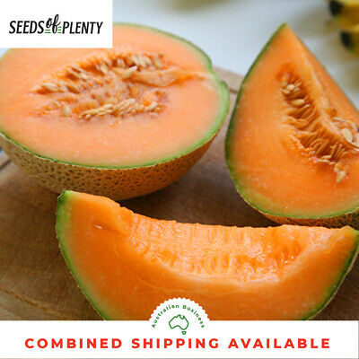MELON - Hales Best (75 Seeds) JUMBO Bulk MICROGREEN Heirloom CANTALOUPE Fragrant
