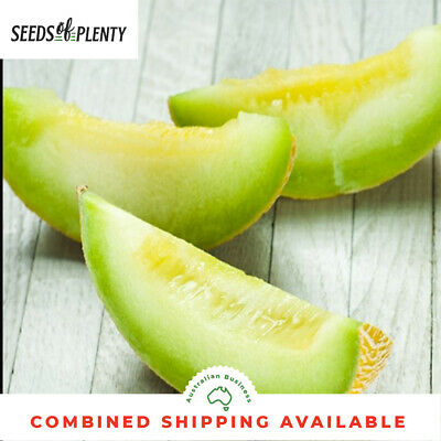 MELON - Honey Dew (75 Seeds) JUMBO Bulk FRAGRANT Rockmelon GREEN FLESH Heirloom