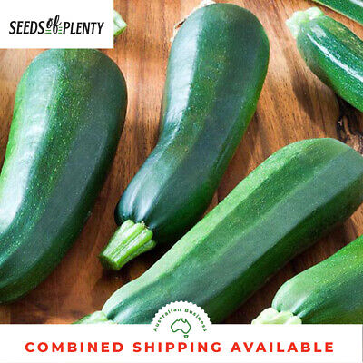 ZUCCHINI - Black Beauty (30 Seeds) BULK Heirloom Courgette BUSH VARIETY Heritage