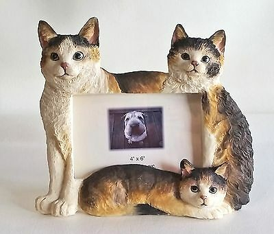 """Photo Frame - 3 Calico Cats Kittens huddle round your favorite photo 4"""" x 6"""""""