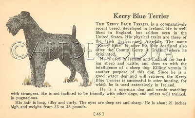 VTG 1938 Kerry Blue Terrier & BRIARD Dog Breed Book Plate Historical Art Page