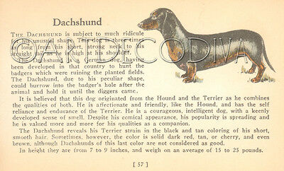 VTG 1938 Dachshund & TOY POODLE Dog Breed Book Plate Historical Art Page