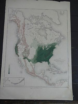 1883 US Map Showing Distribution of Genus Quercus (The Oaks) in N.A.