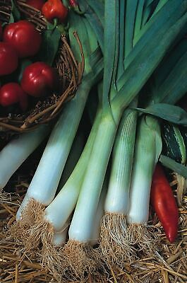 Vegetable - Kings Seeds - Picture Packet - Leek - Blue Solaise - 225 Seeds