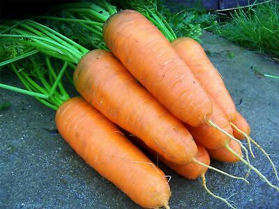 Vegetable - Kings Seeds - Picture Packet - Carrot - Katrin  - 3000 Seeds