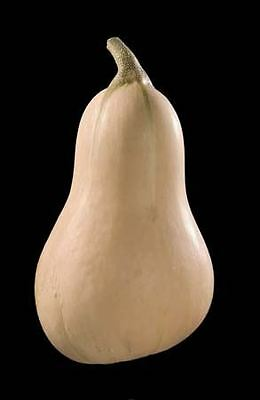 Vegetable - Kings Seeds - Picture Packet - Squash Winter Butternut - Hunter F1