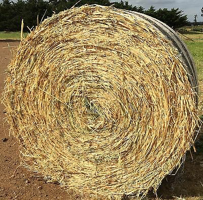 OATEN HAY ROUND BALES 5x4 Top Quality New Seasons